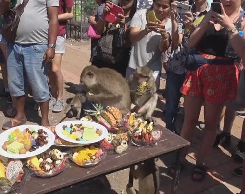 пикник для диких обезьян