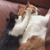 котёнок делает массаж коту