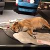 собаки в мебельном магазине