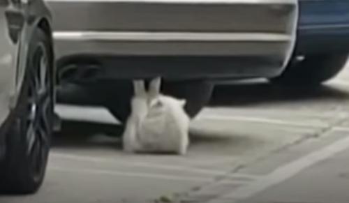 кошка качает пресс под машиной