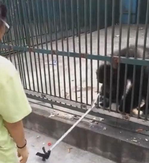 шимпанзе вернул палку для селфи