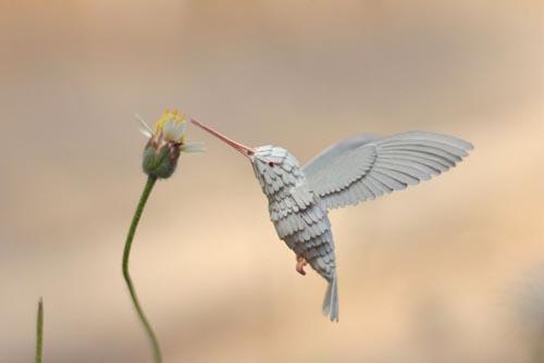 художники любят птиц