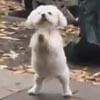 собаку оставили возле кафе