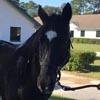 лошадь получила шанс на жизнь