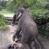 верёвочная лестница для слона