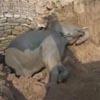 слонёнок упал в колодец