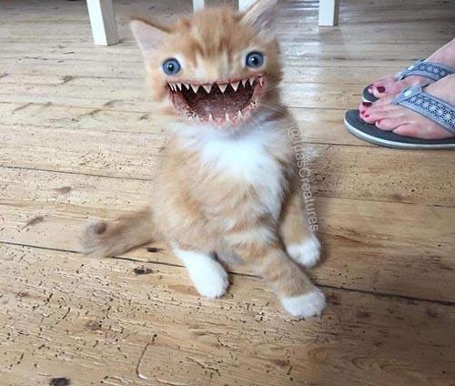 животные превращаются в монстров
