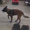 полицейский пёс в зимних ботинках