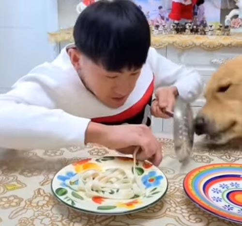 собака быстро ест лапшу