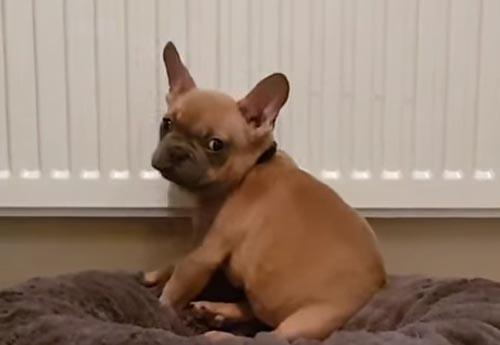 щенок возле тёплой батареи