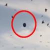 вороны окружили нло в небе