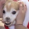 приютский пёс без носа