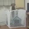 собака в открытом вольере