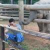игривый слонёнок ждёт внимания