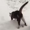кошке не понравился первый снег