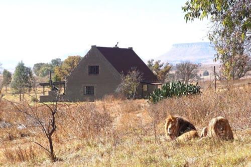 дом окружённый львами