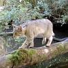 мост через водоём для животных