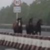 лошадиные скачки на трассе