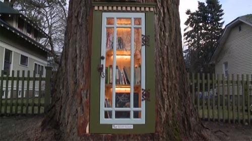 маленькая библиотека в дереве