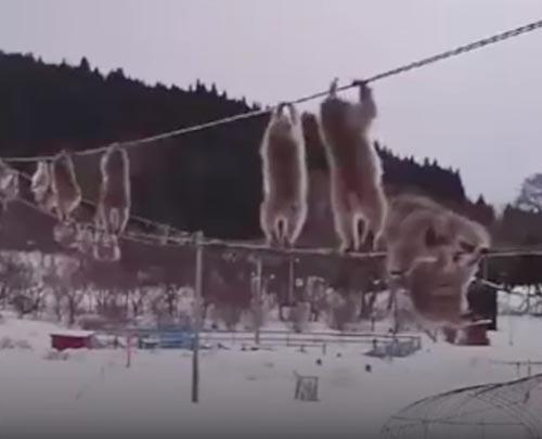 забавное представление обезьян