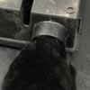 кот застрял в ловушке для крыс