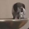 умный голубь напился из фонтанчика