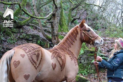 искусство стрижки лошадей