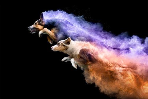 собаки в цветном порошке