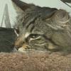 кошкам сняли дорогую квартиру