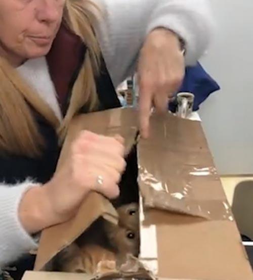 спасение кошек из коробок