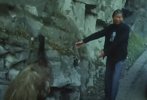 страус устроил забег на дороге