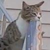 кот ворует газеты у соседей