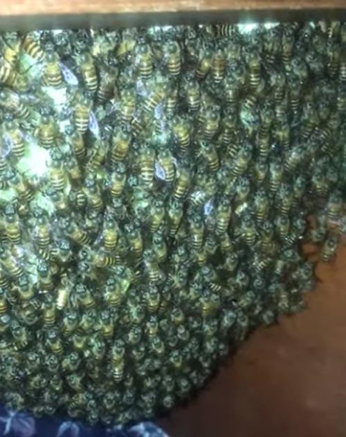 пчелиный улей в шкафу