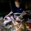 психолог для осьминогов