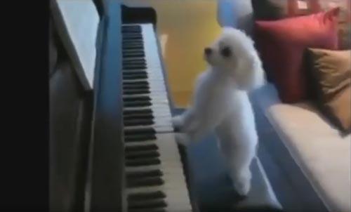 собака играет на фортепиано