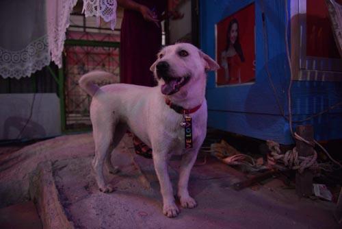 банкет в честь нашедшегося пса