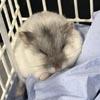 кошка украла чужого хомячка