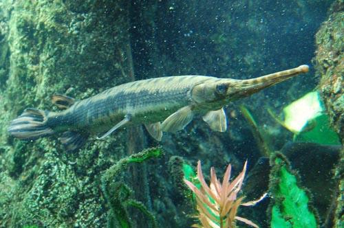 рекордно крупная рыбина