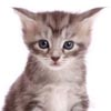 видео со взрослением кошки