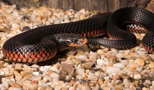 змея спряталась в траве и листьях