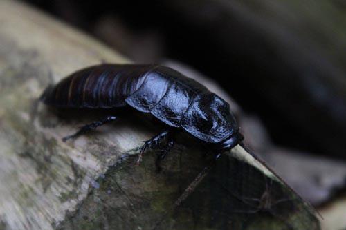 имя для таракана в зоопарке