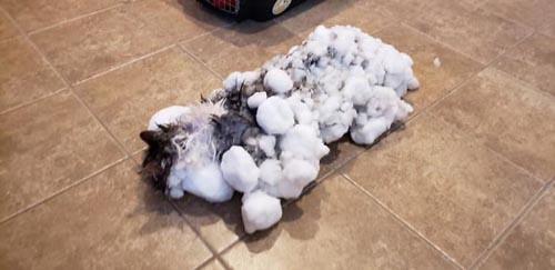 кошка чуть не замёрзла насмерть