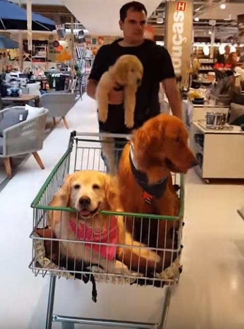 покупатель с тремя собаками