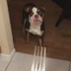 собака боится вилок