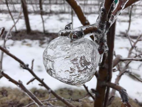 ледяные призрачные яблоки