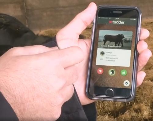 мобильное приложение для коров