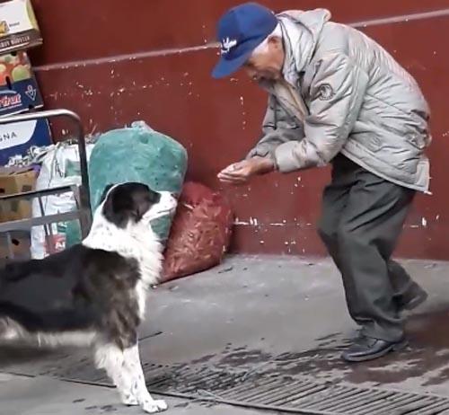 старик напоил бездомную собаку