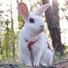 кролик выучил много трюков