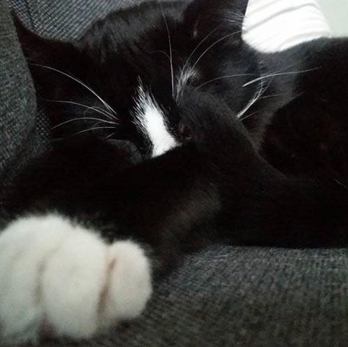 чёрная кошка побелела
