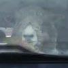 необычные пассажиры в машине
